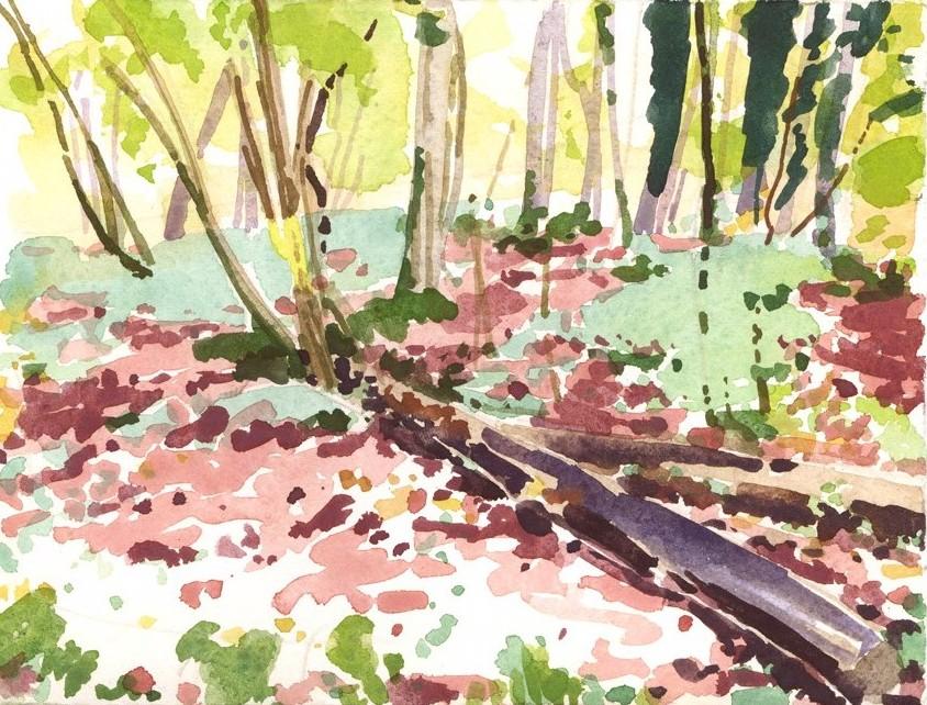 Olivier Morel, Forêt 17, aquarelle sur papier, 13 x 16.5
