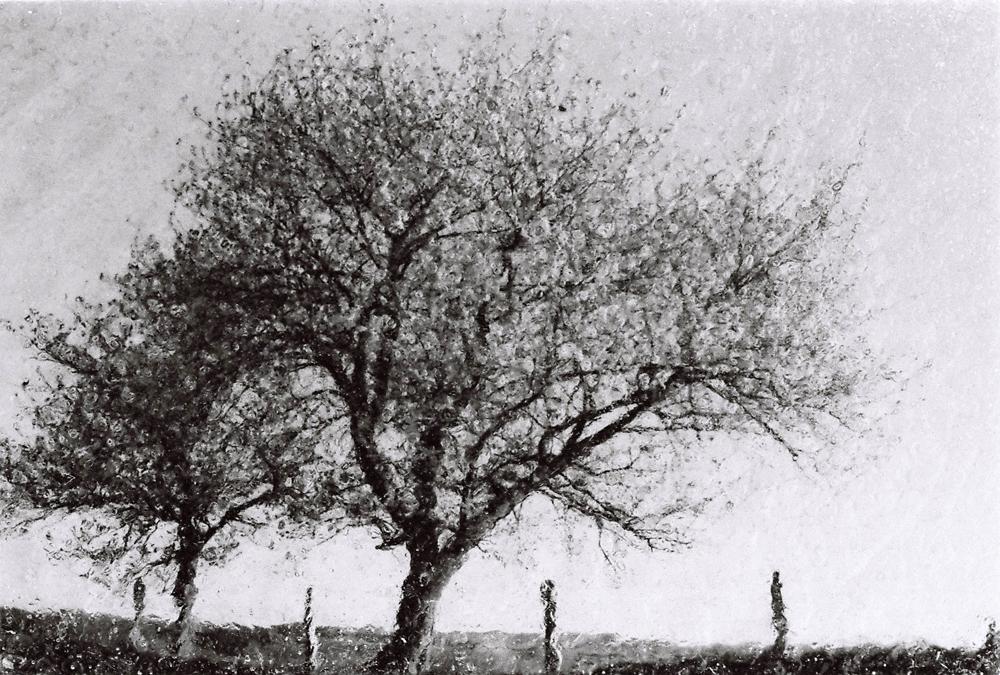 Baghir, PN 151-015, 30 x 40 cm Photographie sur papier