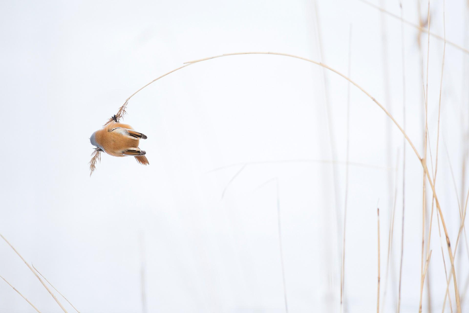 Pendulum - Michel d'Oultremont - KAZoART