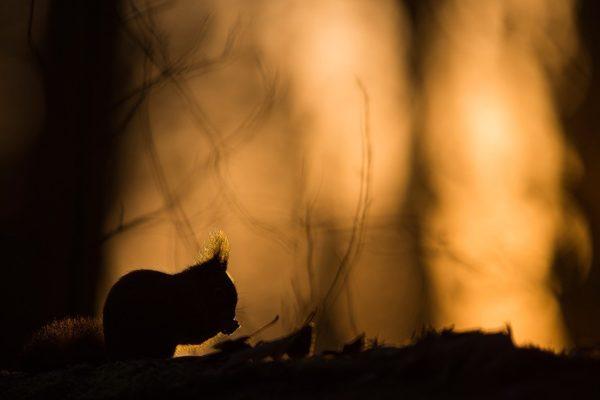 Lutin des bois au soleil - Michel d'Oultremont - Photographie numérique