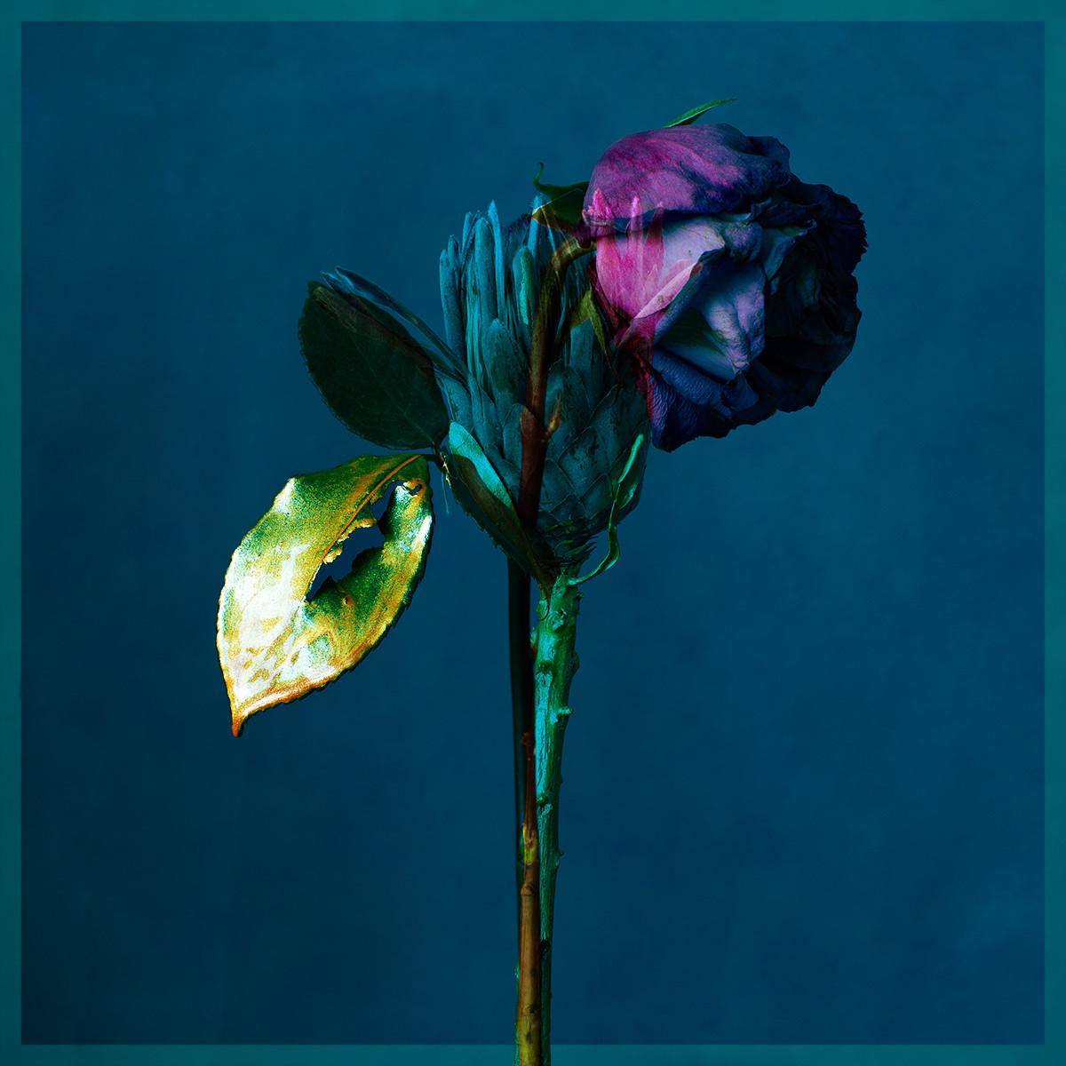 Dis moi la fleur 13