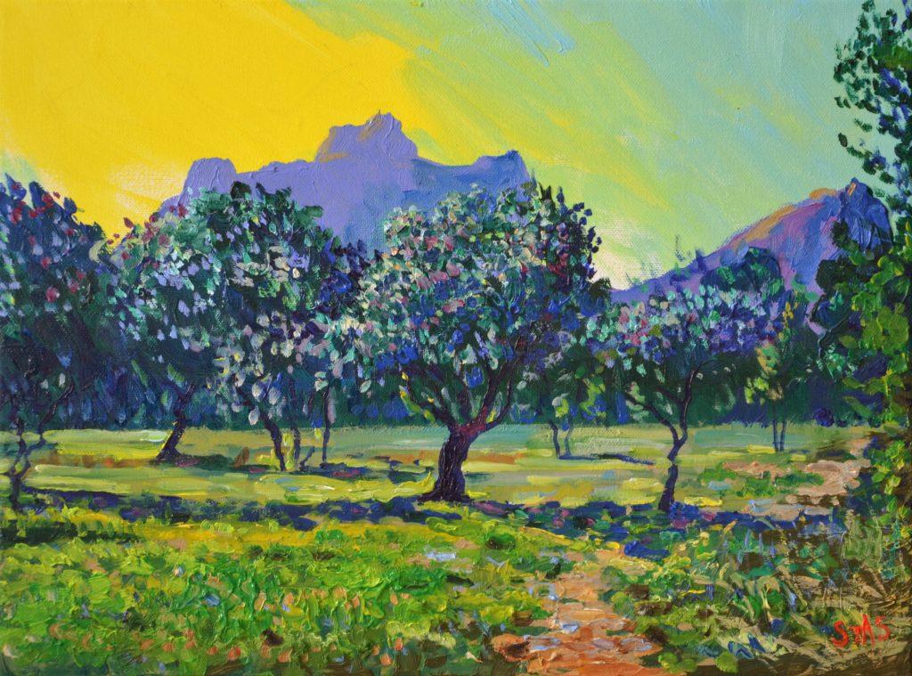 L'oliveraie dans les Alpilles