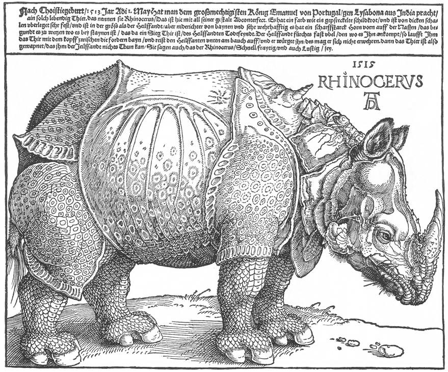 estampes rhinocéros kazoart