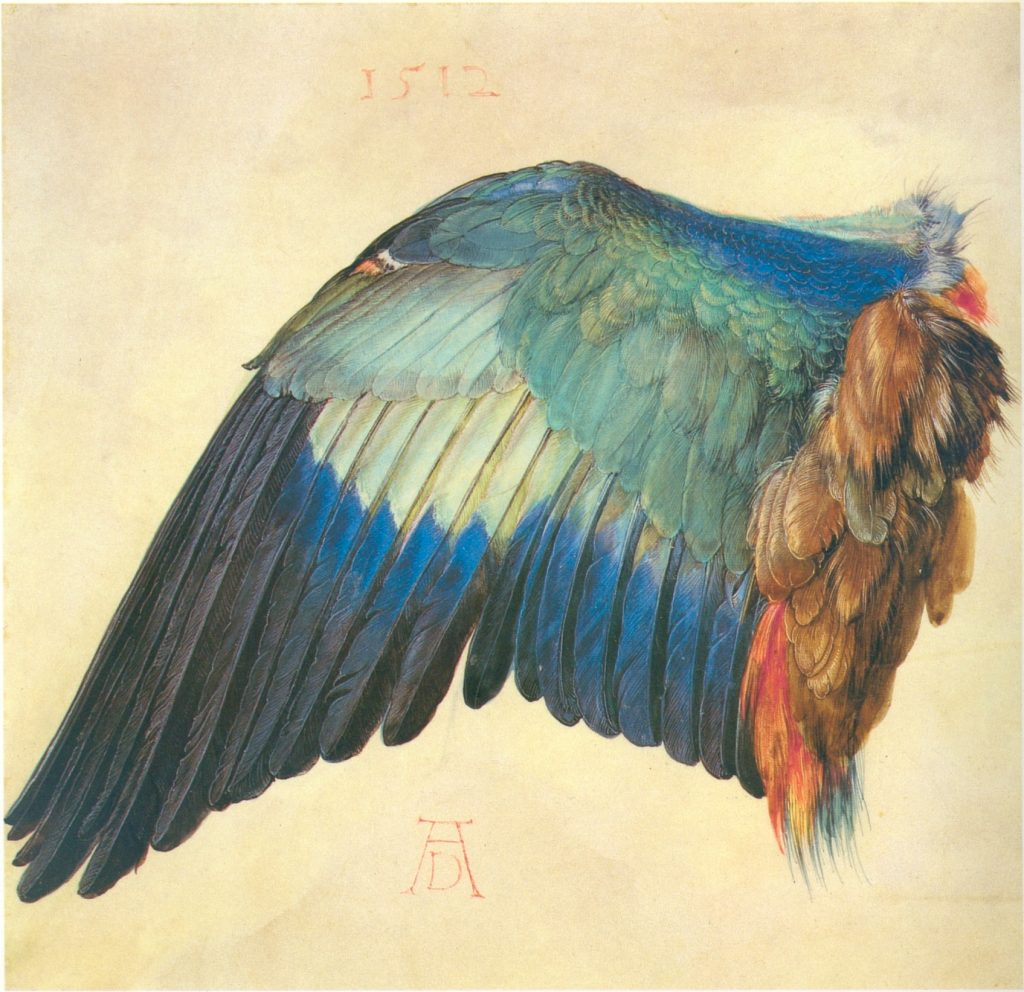 Duerer_wing_of_a_blue_roller