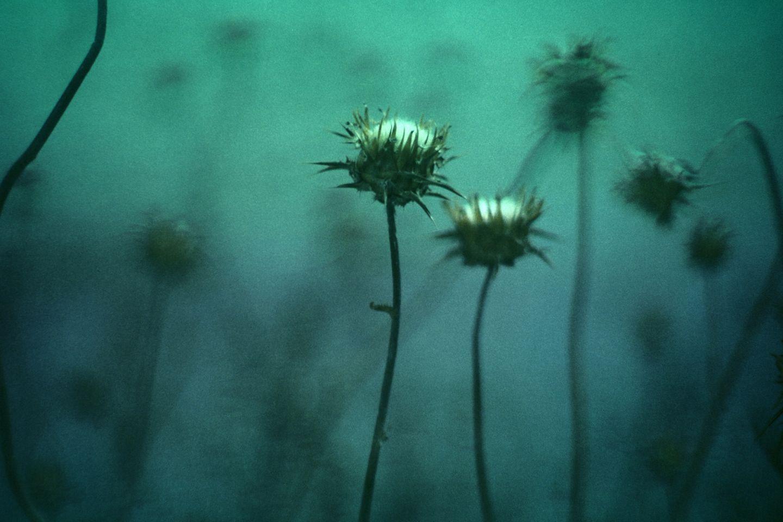 dis-moi-la-fleur-12