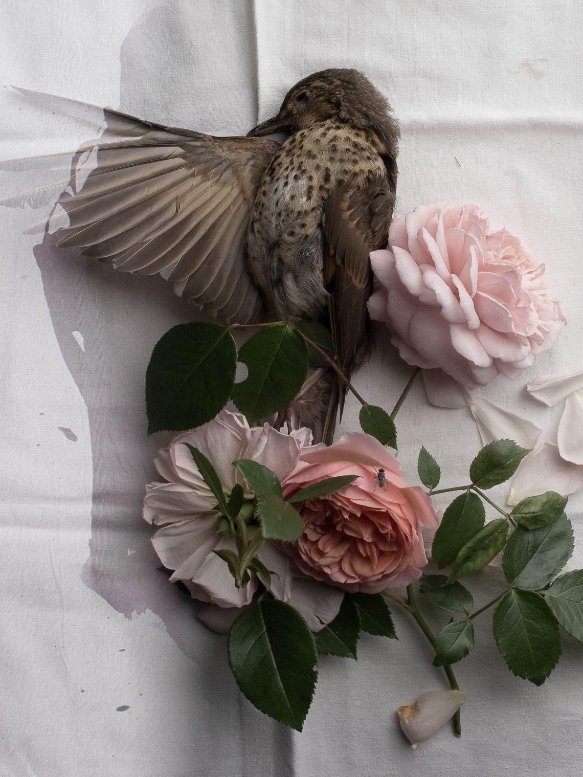 Photographie Carole Charbonnier